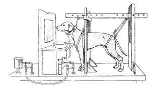 Pavlov's Drawing of experiment [ref 3]