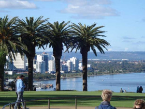 Palm trees across the Swan River