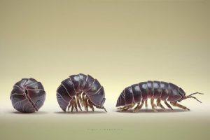 Three yoga poses of a Roly Poly
